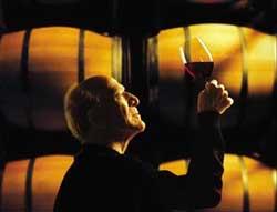 Энолог - специалист по изготовлению вина фото